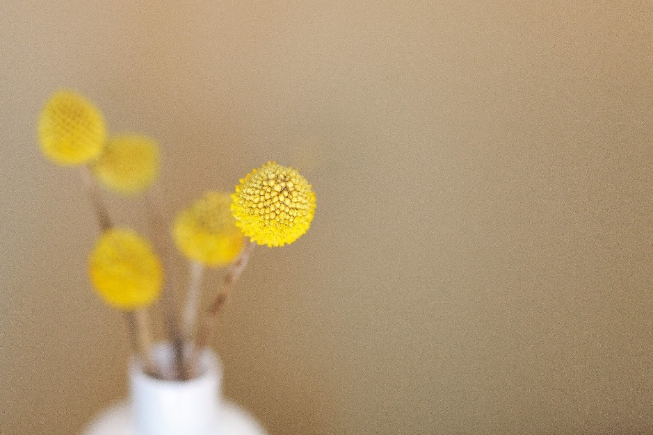 round yellow seed heads in a white vase